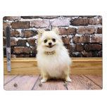 Pomeranian - cuello de la vanidad de Abby Pizarras Blancas De Calidad