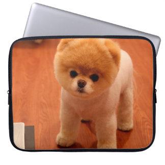 Pomeranian-cute