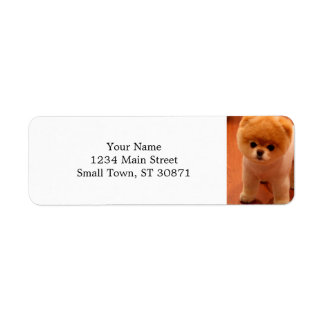 Pomeranian-cute puppies-spitz-pom dog-pom puppies label