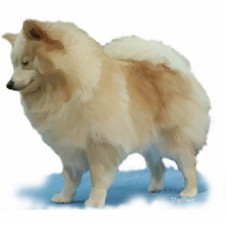 Pomeranian de pie fotoescultura vertical