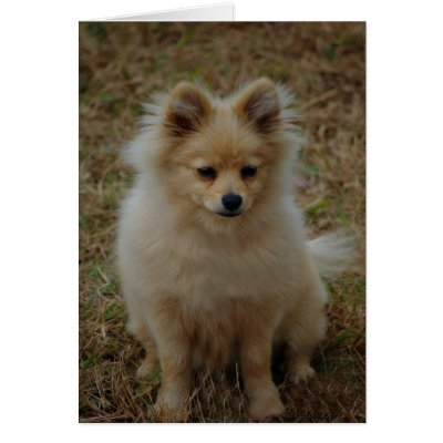 small dog breeds images. of small dog breed