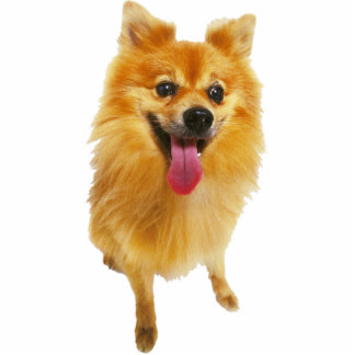 Pomeranian Dog Cutout