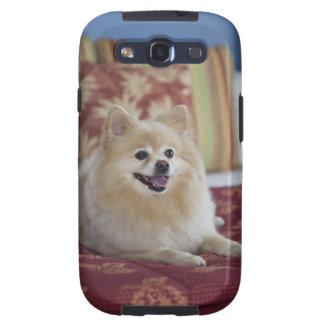 Pomeranian dog in pet friendly hotel room galaxy SIII cover