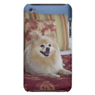 Pomeranian dog in pet friendly hotel room iPod Case-Mate case