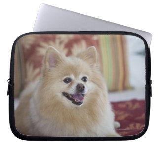 Pomeranian dog in pet friendly hotel room laptop sleeve