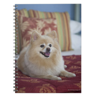Pomeranian dog in pet friendly hotel room spiral note book