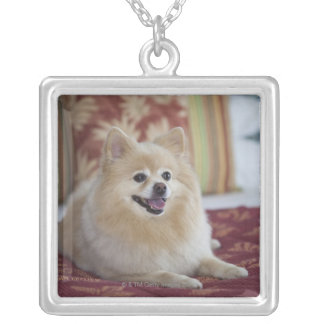 Pomeranian dog in pet friendly hotel room square pendant necklace