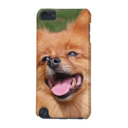 Pomeranian dog ipod touch 4G case, gift idea iPod Touch 5G Case