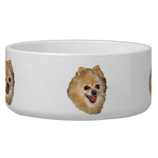 Pomeranian Dog on Brown Dog Dish