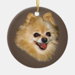 Pomeranian Dog on Brown Ornament