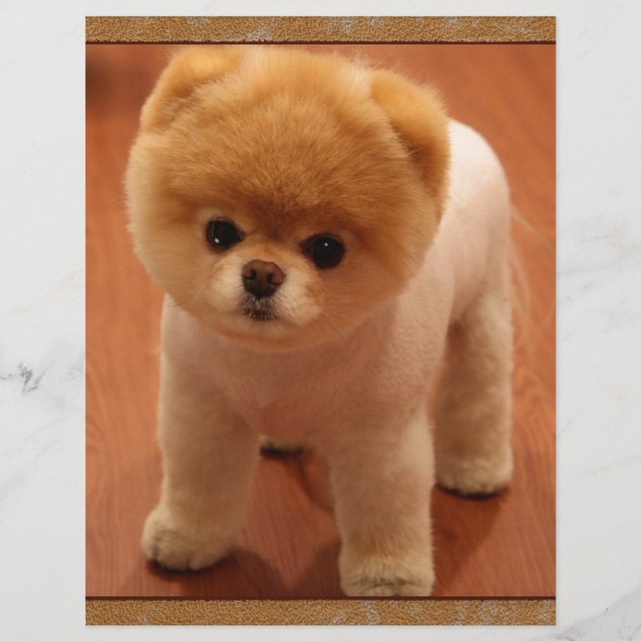 Pomeranian Dog Pet Puppy Small Adorable Baby Zazzle Com