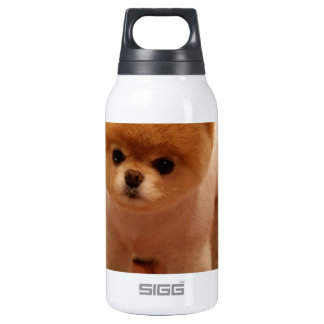 Pomeranian Dog Pet Puppy Small Adorable baby Insulated Water Bottle