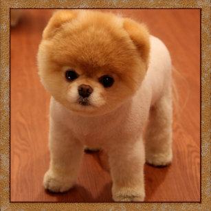 Pomeranian Dog Keychains Lanyards Zazzle