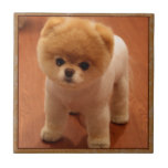 """Pomeranian Dog Pet Puppy Small Adorable baby Tile<br><div class=""""desc"""">Pomeranian Dog Pet Puppy Small Adorable baby</div>"""