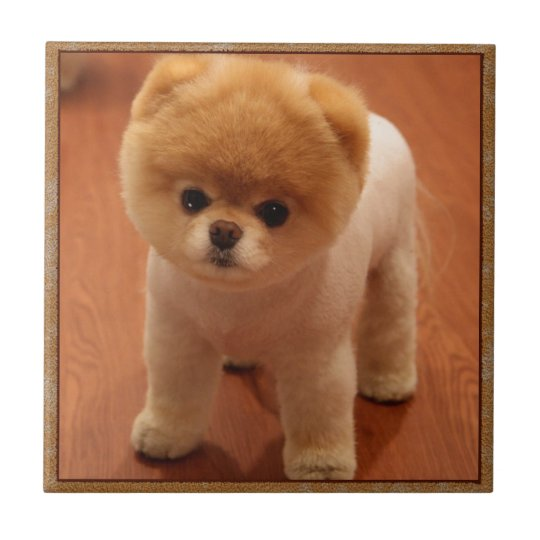 Pomeranian Dog Pet Puppy Small Adorable Baby Tile Zazzle Com