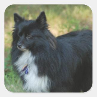 Pomeranian Dog Sticker