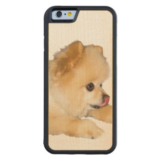 Pomeranian Dog Sticking Tongue Out Carved Maple iPhone 6 Bumper Case