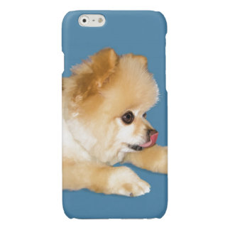 Pomeranian Dog Sticking Tongue Out Glossy iPhone 6 Case