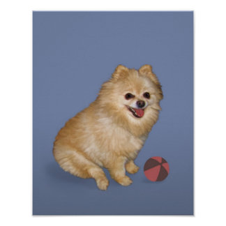 Pomeranian Dog with Ball Poster