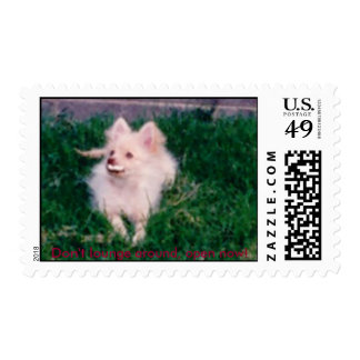 Pomeranian, Don't lounge around, open now! Stamp