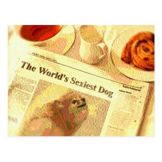 Pomeranian, el perro más atractivo del mundo postales