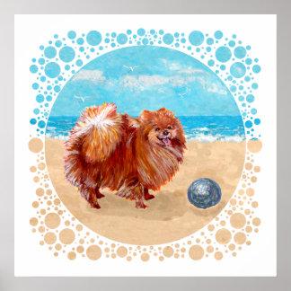 Pomeranian en la costa poster