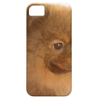 Pomeranian Funda Para iPhone 5 Barely There
