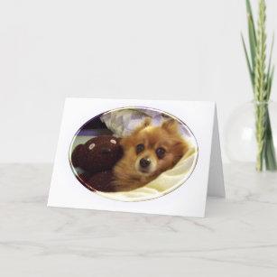Pomeranian Birthday Cards Zazzle