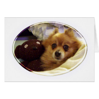 Pomeranian Happy Birthday Card