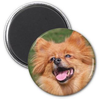 Pomeranian happy dog magnet, gift idea