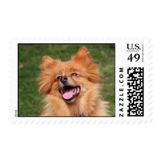 Pomeranian happy dog postage stamp
