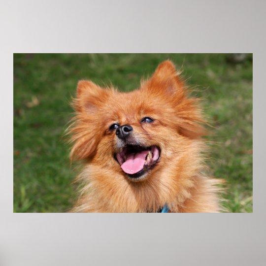 Pomeranian happy dog poster, print, gift idea poster