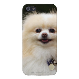 Pomeranian Headshot 1 Cover For iPhone SE/5/5s