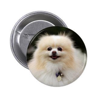 Pomeranian Headshot 1 Pinback Button