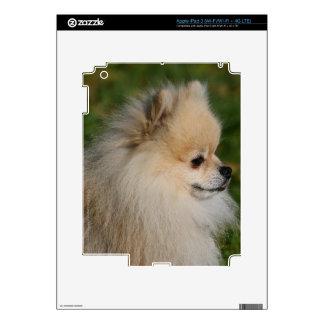 Pomeranian Headshot 2 Decal For iPad 3