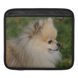 iPad Sleeve with Pomeranian Phone Cases design