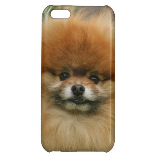 Pomeranian Headshot Looking at Camera iPhone 5C Cover