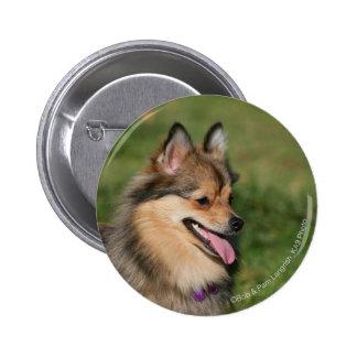 Pomeranian Headshot Panting Pinback Button