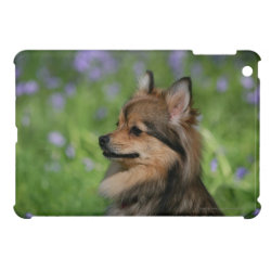 Case Savvy iPad Mini Glossy Finish Case with Pomeranian Phone Cases design