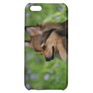 Pomeranian Headshot Sitting iPhone 5C Covers