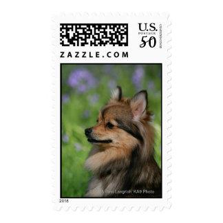 Pomeranian Headshot Sitting Postage
