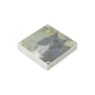 Pomeranian Imán De Piedra