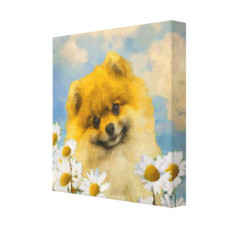 Pomeranian in Daisies Canvas Print