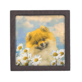 Pomeranian in Daisies Keepsake Box