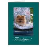 Pomeranian le agradece tarjeta de nota