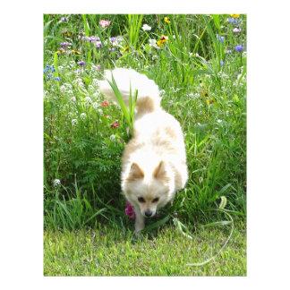 Pomeranian Letterhead