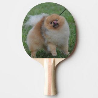 Pomeranian lindo pala de tenis de mesa