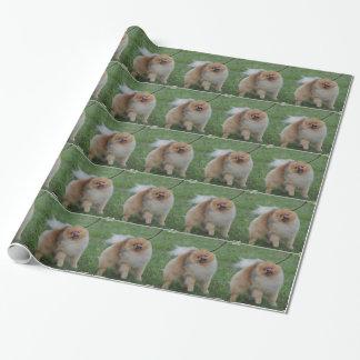 Pomeranian lindo papel de regalo