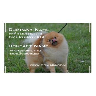 Pomeranian lindo plantilla de tarjeta personal