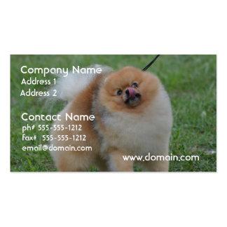 Pomeranian lindo tarjetas personales